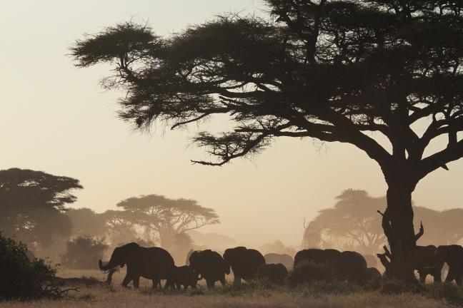 olifanten in schemerlicht