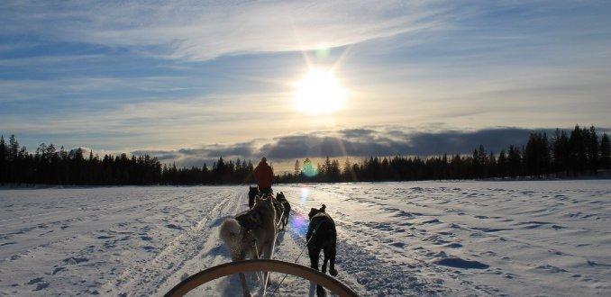 Sledehondentocht in Lapland