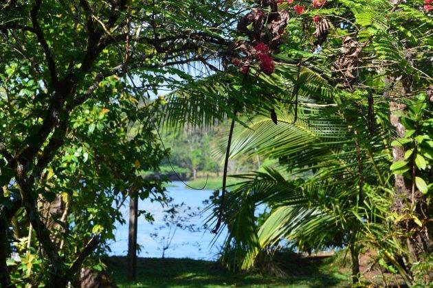 Uitzicht op de jungle en kolibries