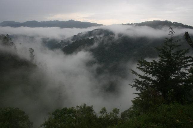 bwindi cloud forest