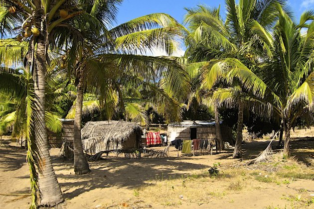 Tussen de palmbomen