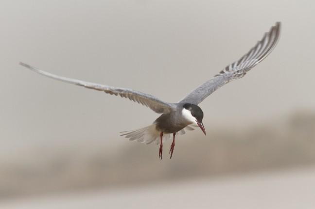varen over het water en de vogel volgen