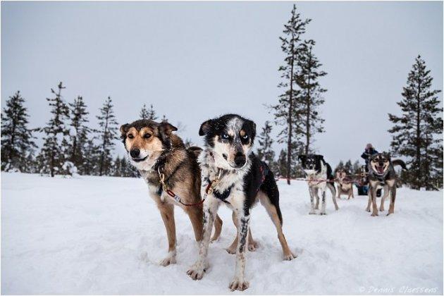 Husky sledge