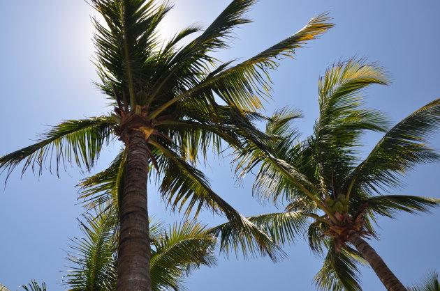 Zon en palmbomen