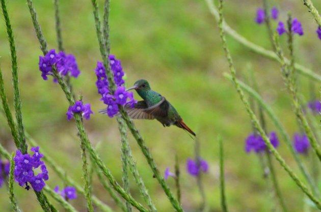 colibri moment