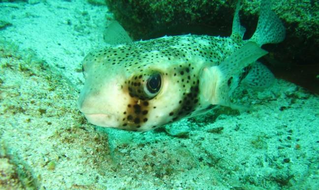 Vis zonder naam??