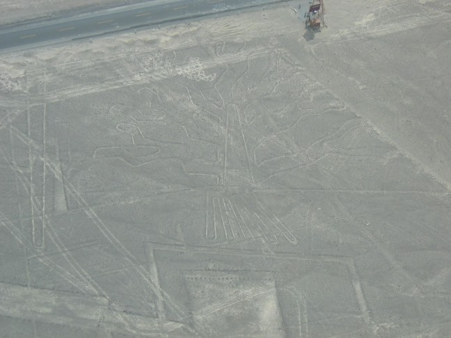 """De """"tree"""" van de lijnen van Nazca"""