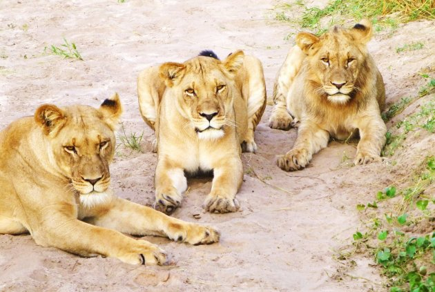 World Lions Day
