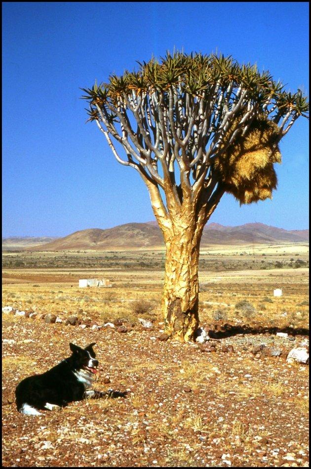 Op weg naar Namibië