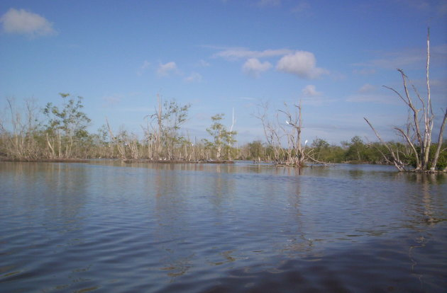 Flamingo's in Bigi Pan natuurgebied