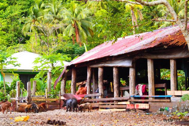 Life in Uafato village Samoa