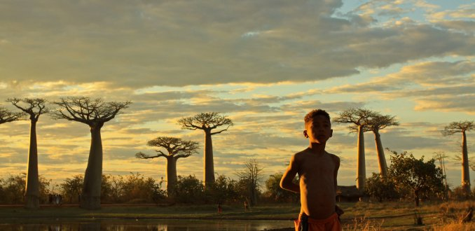 Tussen de Baobab's