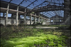 the factory of moss