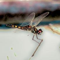 '448026' door Dragonfly