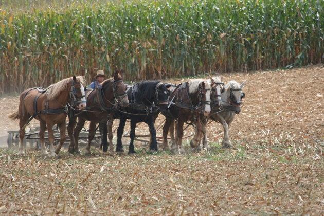 Op zijn Amish.....6 PK!!