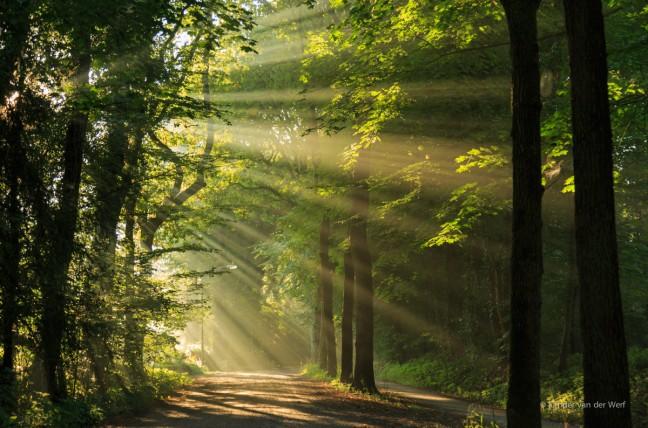 Verlaten laan en zonnestralen die door de bomen schijnen.