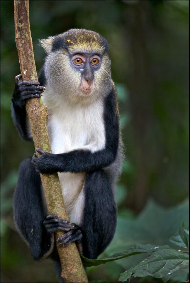 Een gelukkige aap