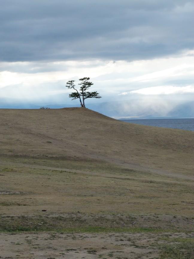 Een eenzame boom aan het Baikalmeer