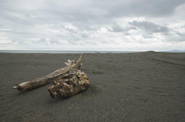 Stronk op strand