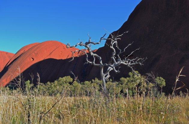 Wandeling rond Uluru