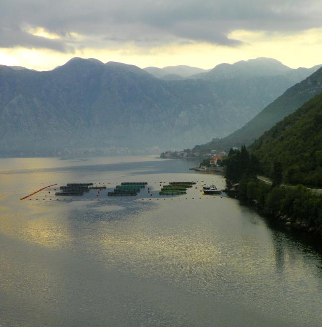 De fjorden nabij Kotor en visvangst