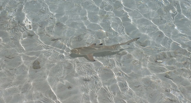 Wat een lieve haai