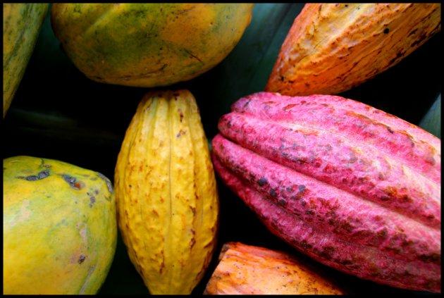 cacao wordt schaarser