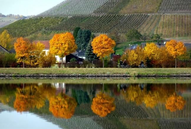 Herfst aan de Moezel