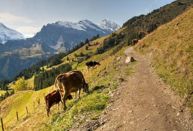 omgeving Interlaken