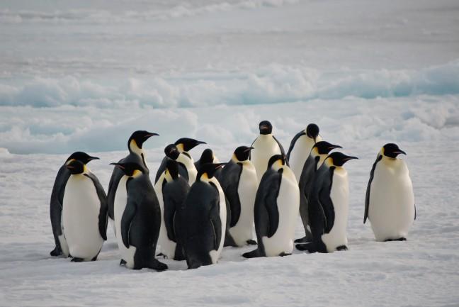 Samenscholing op het ijs