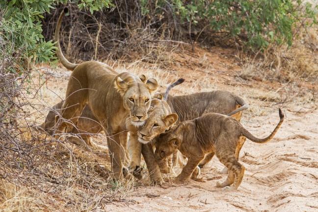 familiehug - leeuwen