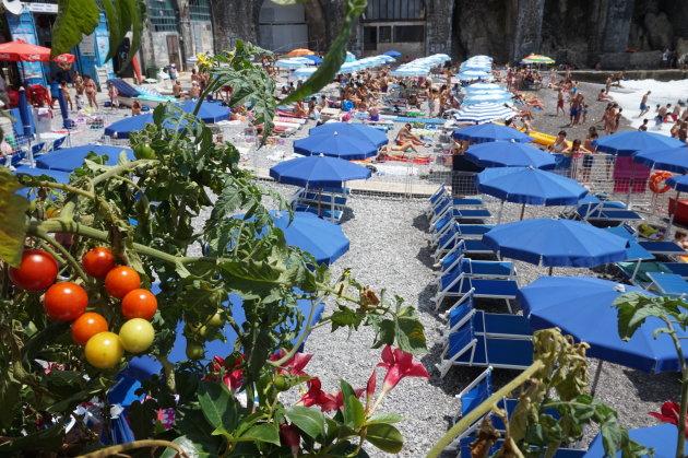 Tomaatjes aan de kust