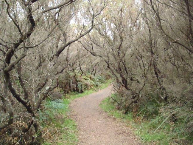 Cape Otway grillig bos