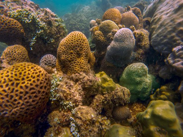 Onderwaterwereld bij Koh Pou