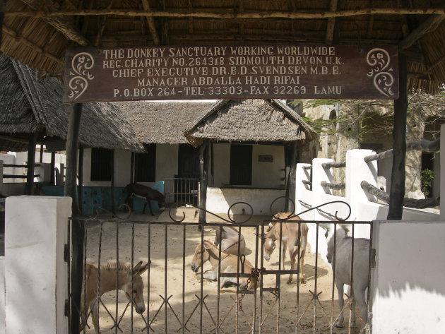 Ezelkliniek in Lamu