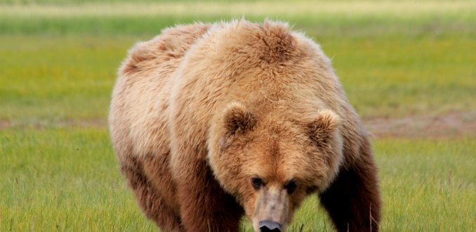 Grizzly man!