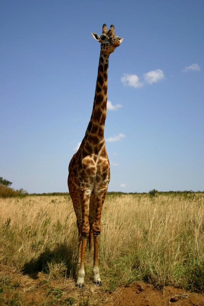 Heb ik de langste nek?