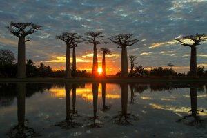 Zonsondergang bij de Baobabs