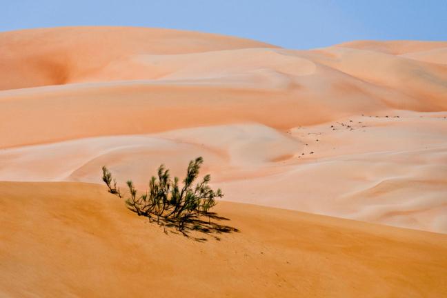 Romige duinen