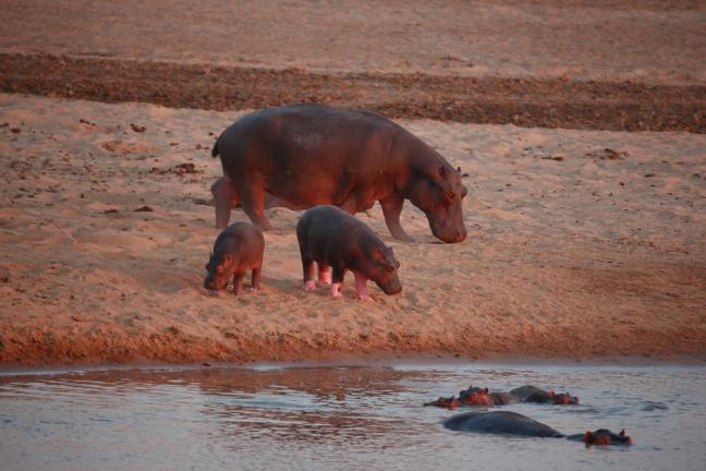 Moeder met jongen