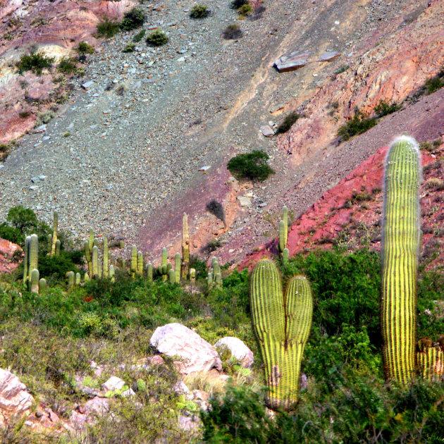 Cactussen in gekleurd berglandschap