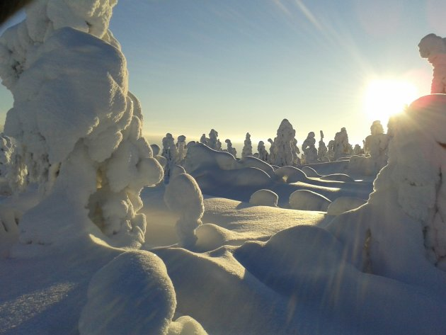 Bevroren landschap zonsopgang