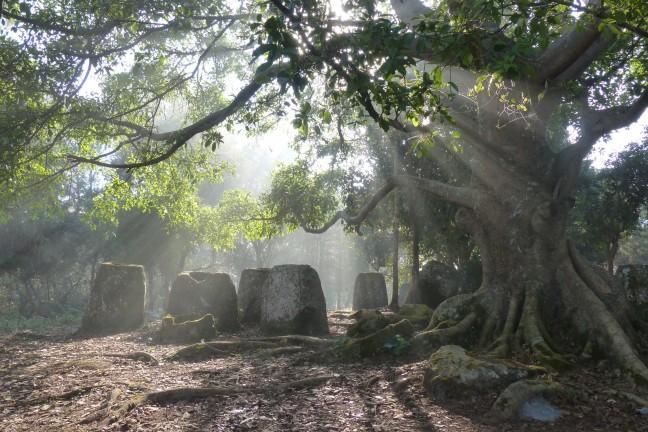 Kruiken in de mist