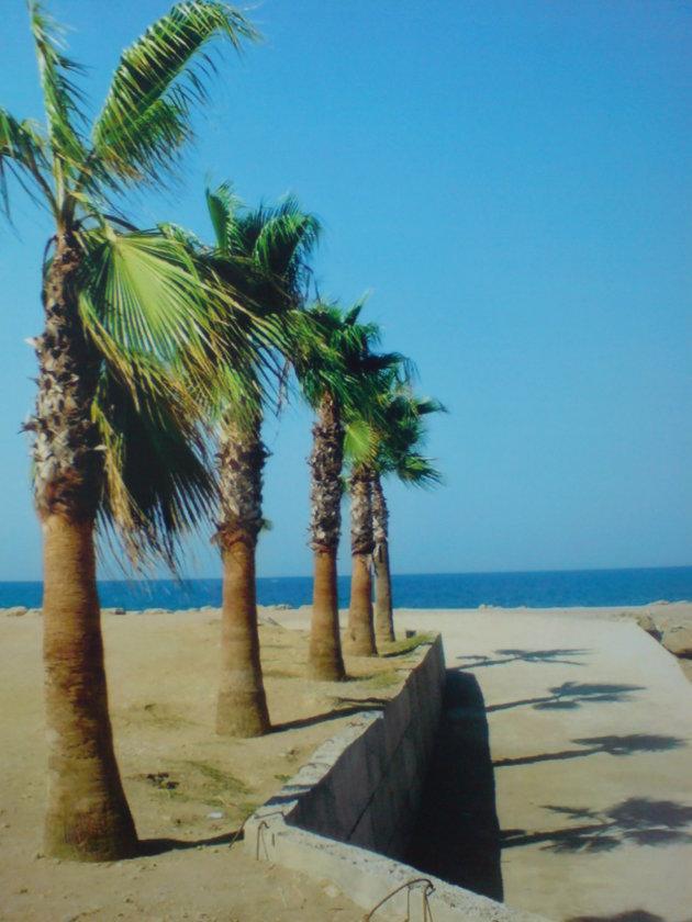 2007: Zeezicht met palmbomen.