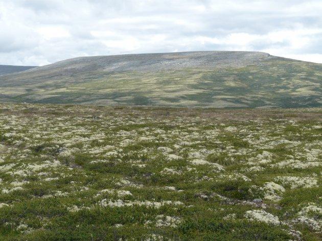 Prachtige korte wandeling in Rondane NP