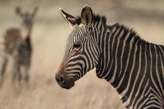 Mount Zebra National Park