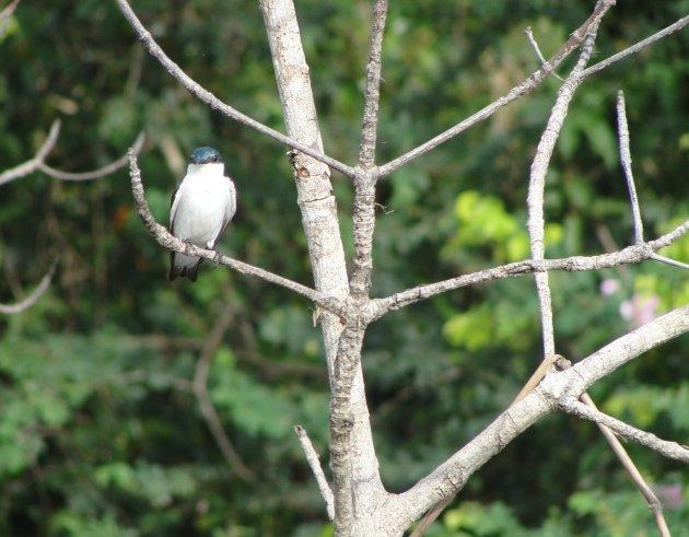 Vogels spotten in Bigi Pan