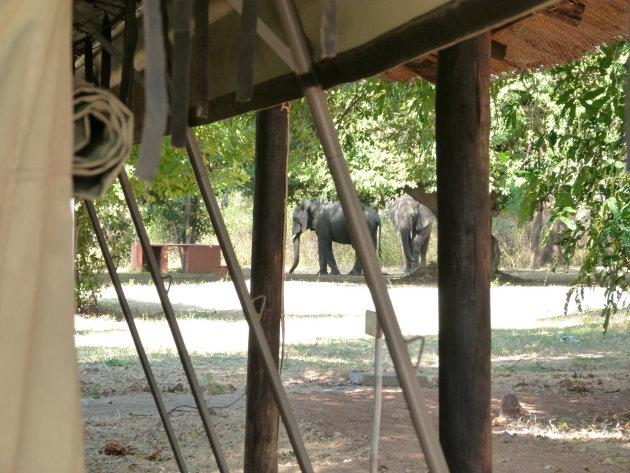 Fantastisch verblijf in South Luangwa NP