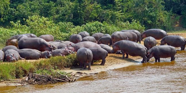 Het is druk in Congo