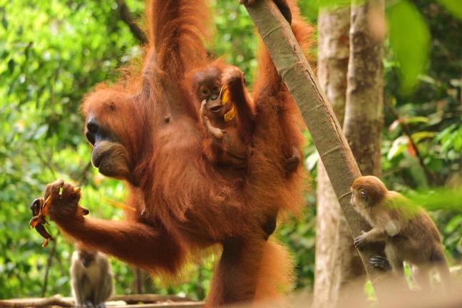 Magisch verschijnsel op Sumatra